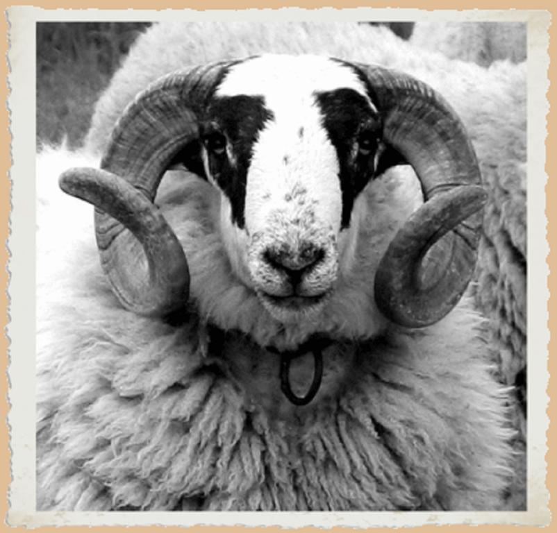 LHôtel du Mouton blanc